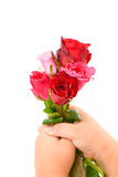 Roses in little hand Stock Image