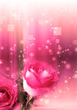 Roses in a Magic Light Royalty Free Stock Photo