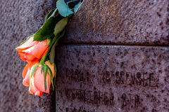 Roses on a memorial wall Royalty Free Stock Photos