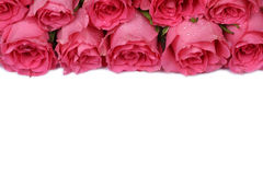 Roses on mother's or Valentine's day with copyspace Stock Photos