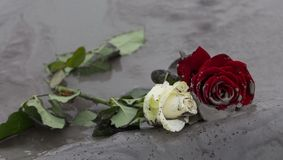 Roses in mud Royalty Free Stock Images