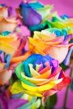 Roses multicolores Image libre de droits