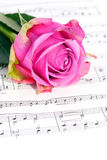 Roses and music. Flower blooming roses lying on the score stock image