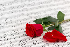 Roses and music sheets Stock Images
