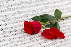 Roses and music sheets. Selective focus royalty free stock photo