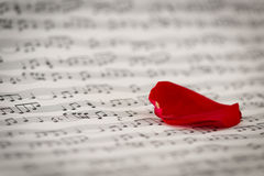 Roses and music sheets. Selective focus stock photography