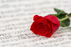 Roses and music sheets. Selective focus Royalty Free Stock Images