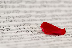 Roses and music sheets. Selective focus royalty free stock image