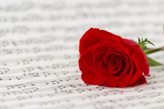 Roses and music sheets. Selective focus Stock Photos