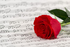 Roses and music sheets. Selective focus stock images