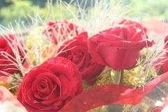Roses for my girlfriend Royalty Free Stock Photography
