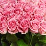 Roses naturelles roses Photographie stock libre de droits