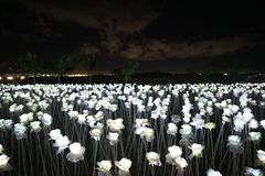10000 Roses night lights. Wonderful sky, beautiful lit white Royalty Free Stock Images