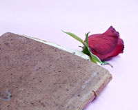Roses in an old book. Over pink background Royalty Free Stock Images