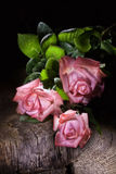 Roses And Old Wood Royalty Free Stock Photos