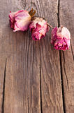 Roses on old wooden background Royalty Free Stock Image