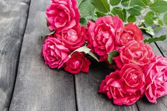 Roses on an old wooden board. Flower frame stock image