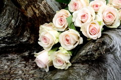 Roses On Tree Trunk Royalty Free Stock Photography