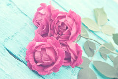 Free Roses On Turquoise Rustic Wooden Background. Spring Flowers. Spr Royalty Free Stock Photography - 77502157