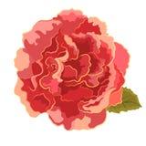 Roses orange simple. Roses orange beautiful garden flower decorative simple vector illustration Stock Photo