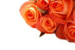 Roses oranges Photo libre de droits