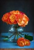 Roses oranges. Images libres de droits