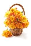 Roses oranges images stock