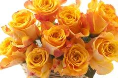 Roses oranges Photos libres de droits