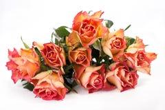 Roses oranges au-dessus de blanc Images stock