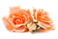 Roses oranges en soie Image libre de droits