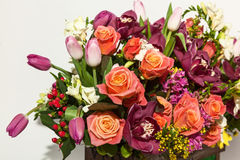 Roses and orchids. Royalty Free Stock Images