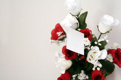 Roses over white stock photography