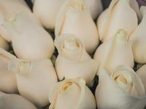 Roses pâles de pêche Photographie stock