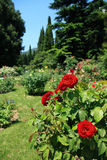 Roses In Park Royalty Free Stock Photography