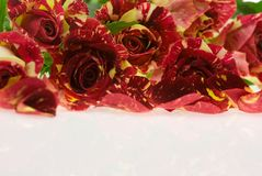 Roses of passion, love and jealousy Royalty Free Stock Photography