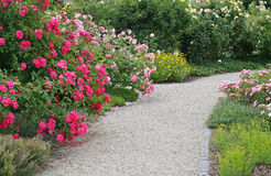 Roses path in beautiful garden. Roses path in beautiful summer garden Stock Photography