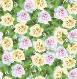 Roses pattern Royalty Free Stock Image