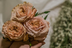 Roses. Peach roses in florist hands Royalty Free Stock Photos