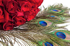 Roses and peacock feathers Royalty Free Stock Image