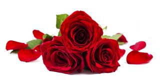 Roses and petal. Bouquet of roses accompanied by petal Stock Photos