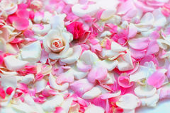Roses petals background. Royalty Free Stock Photo