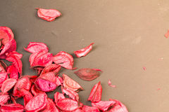 Roses petals on dark background. Love template for valentines day pink flowers corner. Nothing in in center pure empty Stock Photos