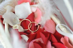 Roses petals and rings Royalty Free Stock Photography