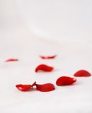 Roses petals on the white silk background Royalty Free Stock Photography