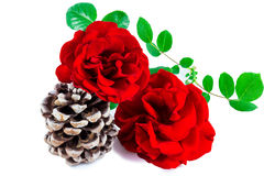 Roses and pine cone Royalty Free Stock Images