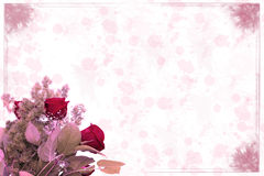 Roses with pink background Royalty Free Stock Images