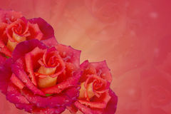 Roses on a pink background . collage Stock Image
