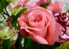 Roses pink bouquet flowers. Pink roses bouquet flowers  romantic Royalty Free Stock Image