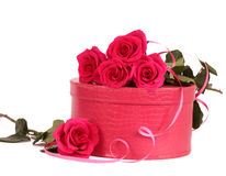 Roses with a pink box Stock Images