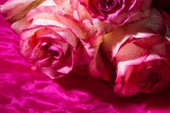 Roses on the pink cloth Royalty Free Stock Photo